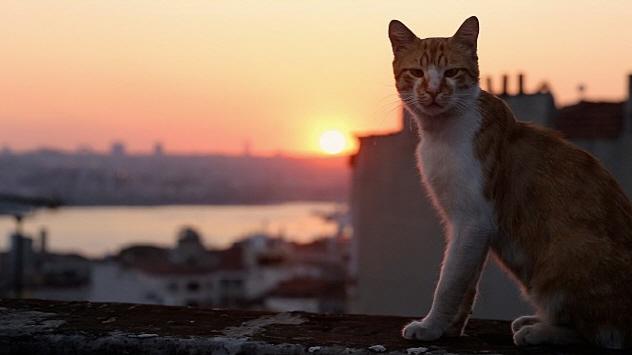 kedi01